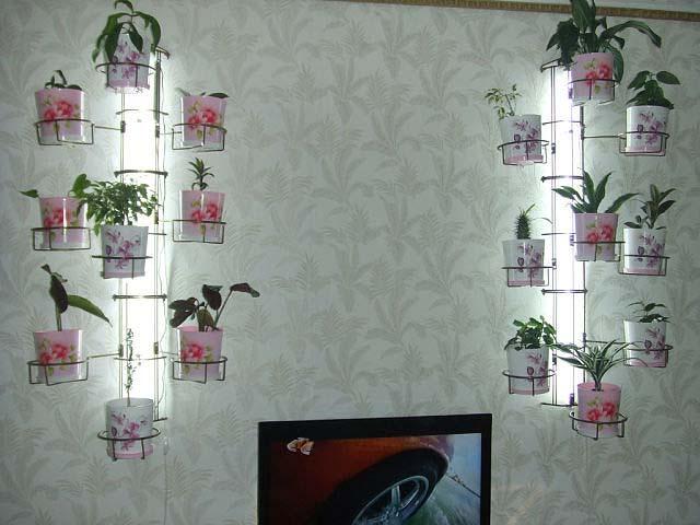 Цветов на полочках на стене