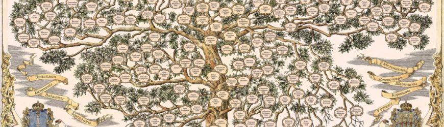 Как правильно составить генеалогическое древо всей семьи - подробная практичная инструкция