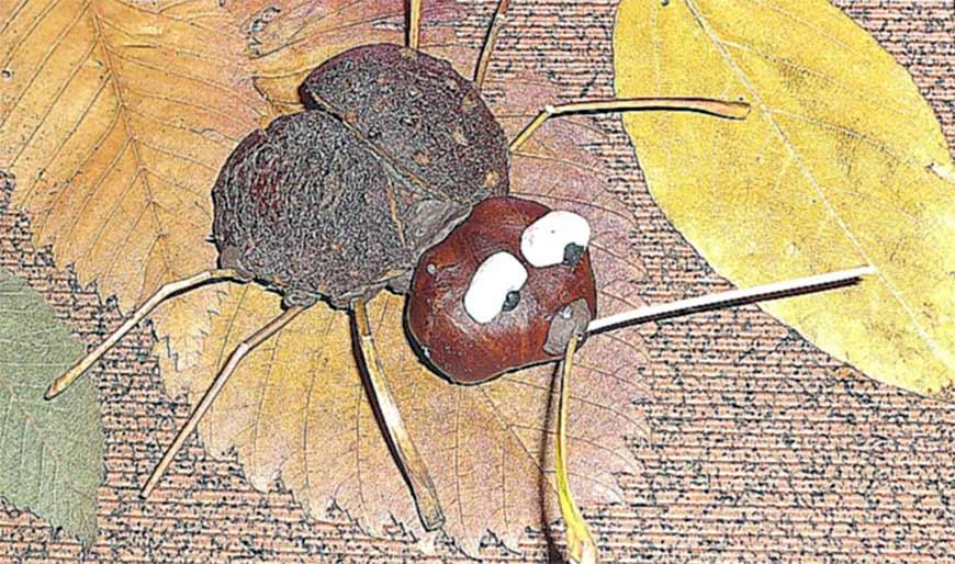 жук из каштанов